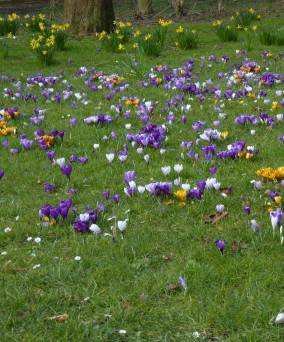 Lente! - Springtime! - Printemps! ©YRH2016