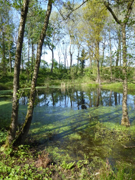Provinciaal Domein Palingbeek (De Bluff) - Provincial Domain Palingbeek (The Bluff) - Domain provinciale Palingbeek ©YRH2016