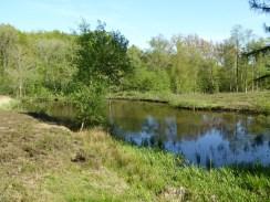Provinciaal Domein Palingbeek (De Vierlingen) - Provincial Domain Palingbeek - Domaine provinciale Palingbeek ©YRH2016
