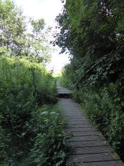 wandelen in het Heuvelland - se promener à Heuvelland - a walk through Heuvelland ©YRH2016