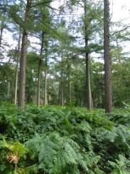 wandelen in de Gasthuisbossen - a walk in the forest 'Gasthuis' - promenade dans le foret 'Gasthuis' ©YRH2016